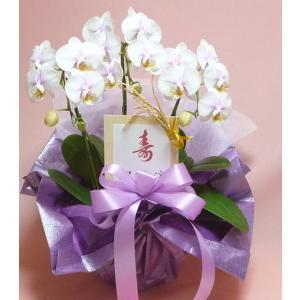 極上の胡蝶蘭 ピンク系3本立 微妙&美白系|kyoto-flower