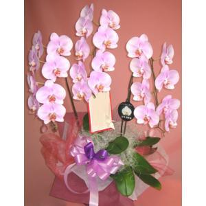 極上の胡蝶蘭 ピンク系|kyoto-flower