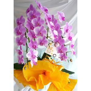 極上のミディ胡蝶蘭3本立ち|kyoto-flower