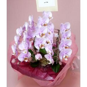 極上のミディ胡蝶蘭|kyoto-flower