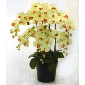 ロイヤル エレガンス ファレノプシス胡蝶蘭 フレッシュライトグリーン色 7本立ち|kyoto-flower