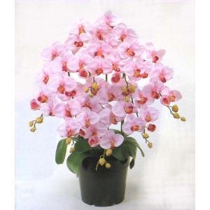 ロイヤル エレガンス ファレノプシス胡蝶蘭 エンジェルピンク色 7本立ち|kyoto-flower