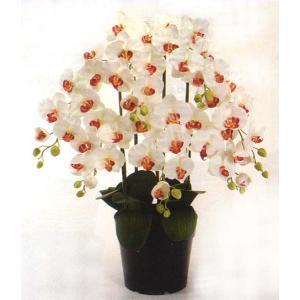 ロイヤル エレガンス ファレノプシス胡蝶蘭 ストロベリーショートケーキ色 5本立ち|kyoto-flower