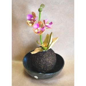 苔玉 ミニ コチョウラン 気軽な御祝い好適品 ご家庭用の縁起物にも |kyoto-flower