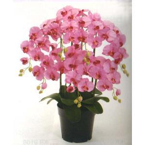 ロイヤル エレガンス ファレノプシス胡蝶蘭 ベリーピンク色 5本立ち|kyoto-flower