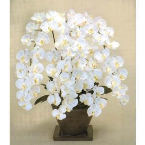 スペシャル ファレノプシス 胡蝶蘭ロワイヤル エンジェルホワイト色|kyoto-flower