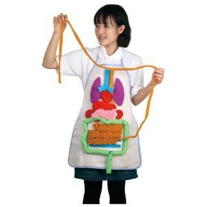 教材 観察 内臓の大きさ説明エプロン kyouzai-j