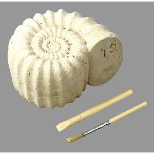 教材 理科実験 発掘キット 化石発掘キット|kyouzai-j|03