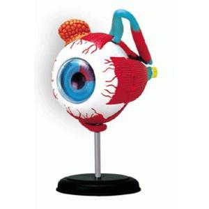 教材 模型  4D VISION 人体解剖 No.02 (眼球解剖モデル)|kyouzai-j