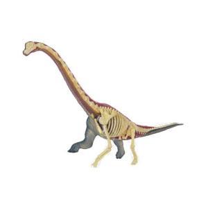 教材 模型  4D VISION 動物解剖 No.24(プラキオサウルス解剖モデル)|kyouzai-j