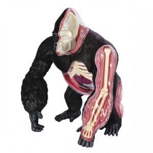 【教材 模型】  4D VISION 動物解剖 No.27 (ゴリラ解剖モデル)|kyouzai-j