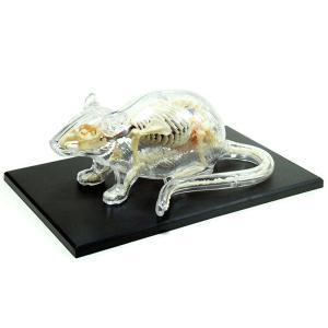 教材 模型  4D VISION 動物解剖 No.14 (ネズミ解剖スケルトンモデル)|kyouzai-j