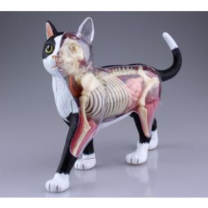 【教材 模型】  4D VISION 動物解剖 No.29 (猫解剖モデル 黒/白)|kyouzai-j