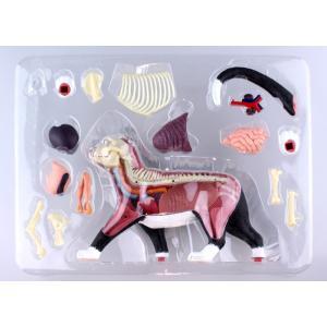 【教材 模型】  4D VISION 動物解剖 No.29 (猫解剖モデル 黒/白)|kyouzai-j|06