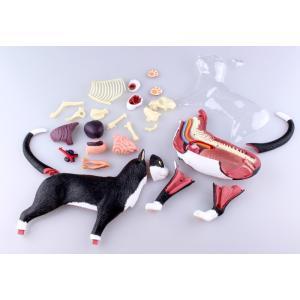 【教材 模型】  4D VISION 動物解剖 No.29 (猫解剖モデル 黒/白)|kyouzai-j|07