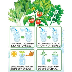 自由研究 育てて食べよう『水耕栽培』|kyouzai-j|02