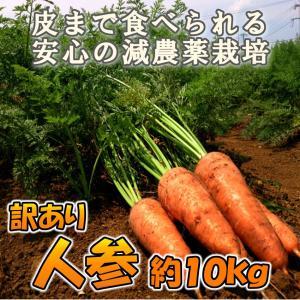 【2kg増量中】 長崎県産(九州産) 訳あり 人参(ニンジン) 約12kg 葉っぱ おまけ