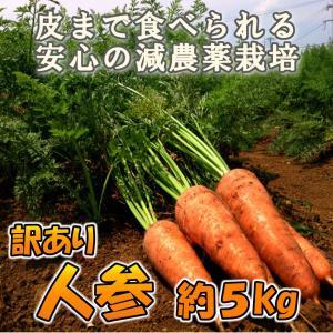 送料0円 長崎県産(九州産) 訳あり 人参(ニンジン) 約2.5kg 2セット以上ご購入で300円OFF!