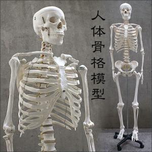 人体模型 等身大 整体 ヒューマンスカル 人体...の詳細画像1
