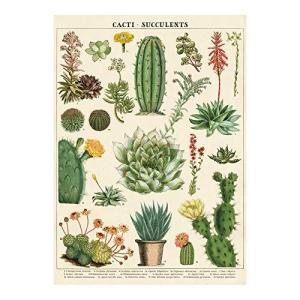 Cavallini Decorative Wrap Poster, Cacti & Succulents, 20 x 28 inch Italian Archival Paper (WRAP/SUC)【並行輸入品】 lakibox28