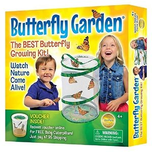 Insect Lore - BH Butterfly Growing Kit - With Voucher to Redeem Caterpillars Later【並行輸入品】 lakibox28
