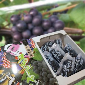 ぶどう スチューベン 青森県産 ぶどう 2Lサイズ 約2kg入り 化粧箱入 スチューベンブドウ 葡萄 ブドウ 種あり lalasite