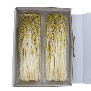 そばもやし そばスプラウト 青森県 平川市 ひらかわ推奨品 150g×2パック 贈答用|lalasite