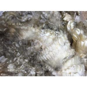 グリージーウール・イングリッシュレスター 白 <紡毛 紡ぎ 染め 羊毛 フェルト>  予約制|lamerr