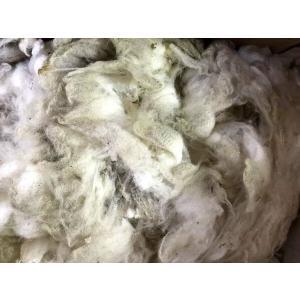 グリージーウール・シェットランド 白系1.2kg <紡毛 紡ぎ 染め 羊毛 フェルト>|lamerr