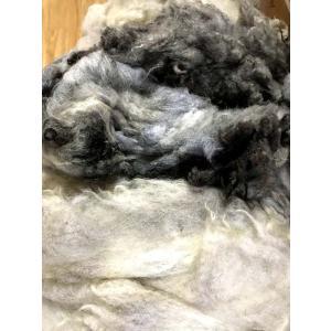 グリージーウール・シェットランド ライトグレー系1.7kg <紡毛 紡ぎ 染め 羊毛 フェルト>|lamerr