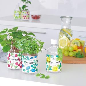 栽培キット 野菜 インテリア おしゃれ プレゼント 育てるグリーンペット 聖新陶芸の画像