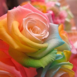 お祝 記念日 女性 彼女 サプライズ レインボーローズ バラ 100本 花束  枯れない花 プリザーブドフラワー 100本 花束|leaves78|03