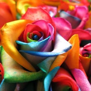 レインボーローズ 花束 贈物 お好きな本数だけレインボーローズ 10本以上からのご注文に限らせて頂い...