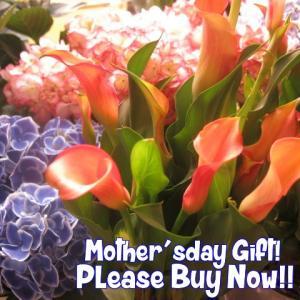 母の日 鉢植え カラー オレンジ色 カラーの鉢植え 母の日期...
