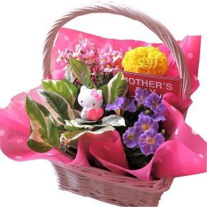 キティ フラワーギフト 鉢植え   季節の可愛いお花にキティ マスコット が付いた人気商品! バスケ...