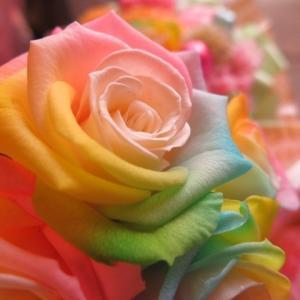 クリスマスプレゼント 花束 レインボーローズ  プリザーブドフラワー使用 枯れない 大輪レインボーローズ  50本 花束|leaves78|05