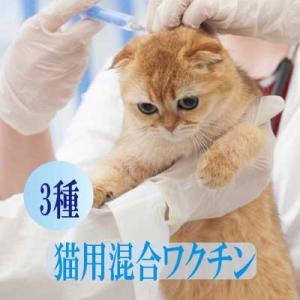 猫用3種混合ワクチン 表示金額は往診料とワクチン代を含む総額です【往診対応地域の方のみお買い上げ可能】|lechien-life