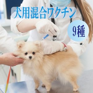 犬用9種混合ワクチン 表示金額は往診料とワクチン代を含む総額です【往診対応地域の方のみお買い上げ可能】|lechien-life
