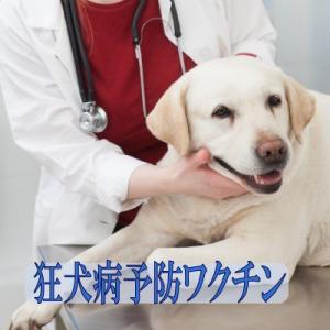 狂犬病予防ワクチン 表示金額は往診料とワクチン代を含む総額です【往診対応地域の方のみお買い上げ可能】|lechien-life