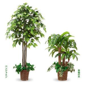 観葉植物風 ベンジャミン 幸福の木2点セット リビング、事務所、店舗用品インテリアグリーン 光触媒加工|liberty