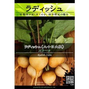 西洋野菜種子 ラディッシュ ズラータ [Life with Green]|life-with-green