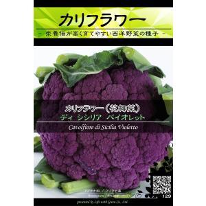 西洋野菜種子 カリフラワー ディシシリアバイオレット | 紫色 ピクルス サラダ [Life with Green]|life-with-green