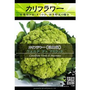 西洋野菜種子 カリフラワー マセラッタ (黄緑実) [Life with Green]|life-with-green