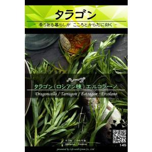 ハーブ種子 タラゴン(ロシアン種) エルコラーノ [Life with Green] life-with-green