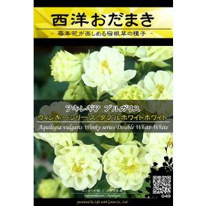 宿根草種子 アキレギア ウィンキーシリーズ ダブルホワイトホワイト ×3袋【送料無料】 [Life with Green]|life-with-green
