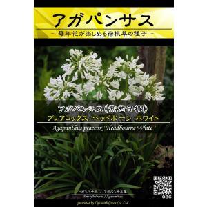 宿根草種子 アガパンサス ヘッドボーン ホワイト ×3袋【送料無料】 [Life with Green]|life-with-green