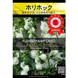 宿根草種子 八重咲きアルセア チェイターズ ホワイト ×3袋【送料無料】 [Life with Green]|life-with-green