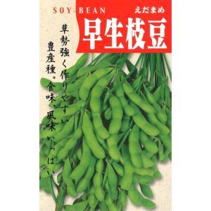定番野菜種子 えだまめ 早生枝豆 [春][直売限定][Life with Green]|life-with-green