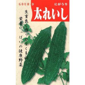 定番野菜種子 にがうり 太れいし [春][直売限定][Life with Green]|life-with-green