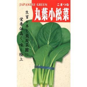 定番野菜種子 こまつな 丸葉小松菜 [春][直売限定][Life with Green]|life-with-green
